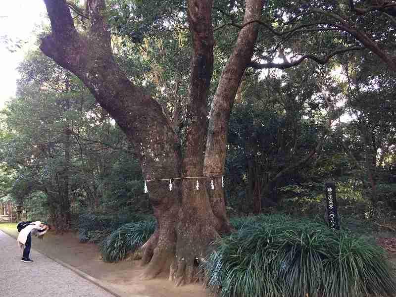 【ジェットスターで行く】青島から鬼の洗濯岩を見て飫肥まで【宮崎】参道のご神木
