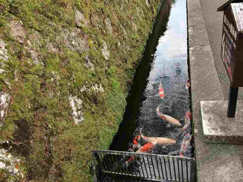 【ジェットスターで行く】青島から鬼の洗濯岩を見て飫肥まで【宮崎】飫肥市内10