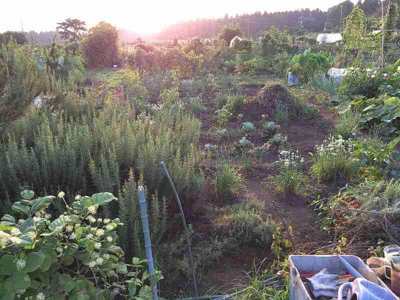 【夏も盛り】スローに楽しむ家庭菜園のすすめ4【ハマスゲに注意】19