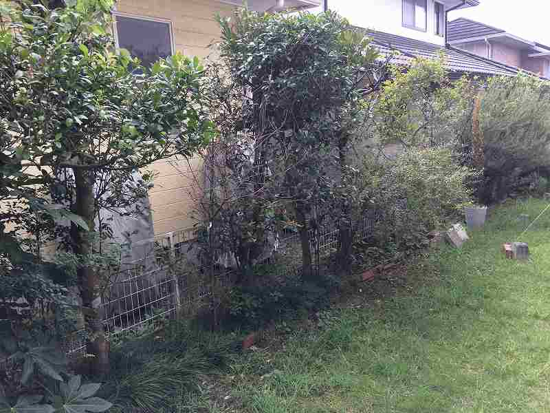 【庭の手入れ】植木屋さんには頼みたくない!【木を大きくしない】-2
