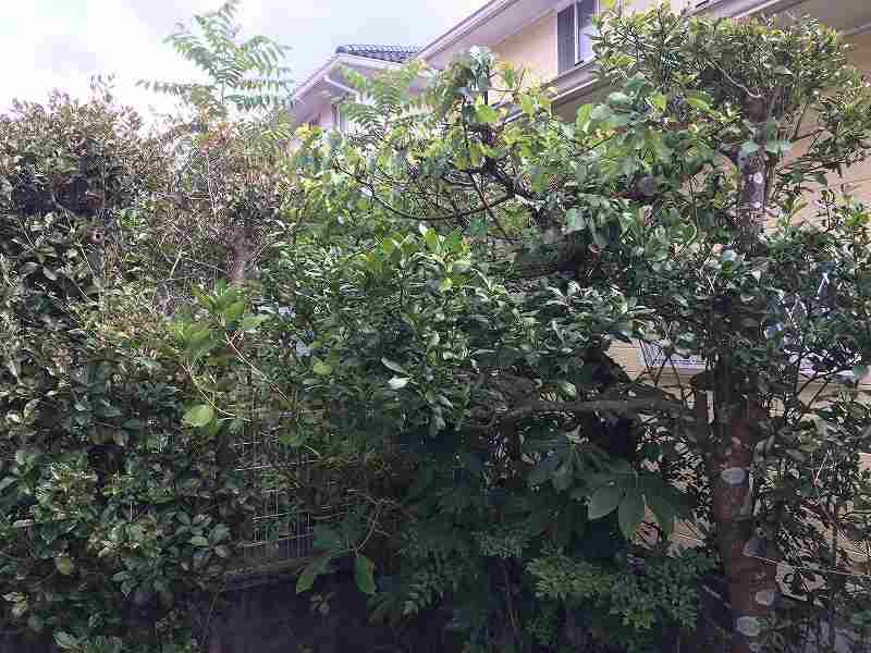 【庭の手入れ】植木屋さんには頼みたくない!【木を大きくしない4
