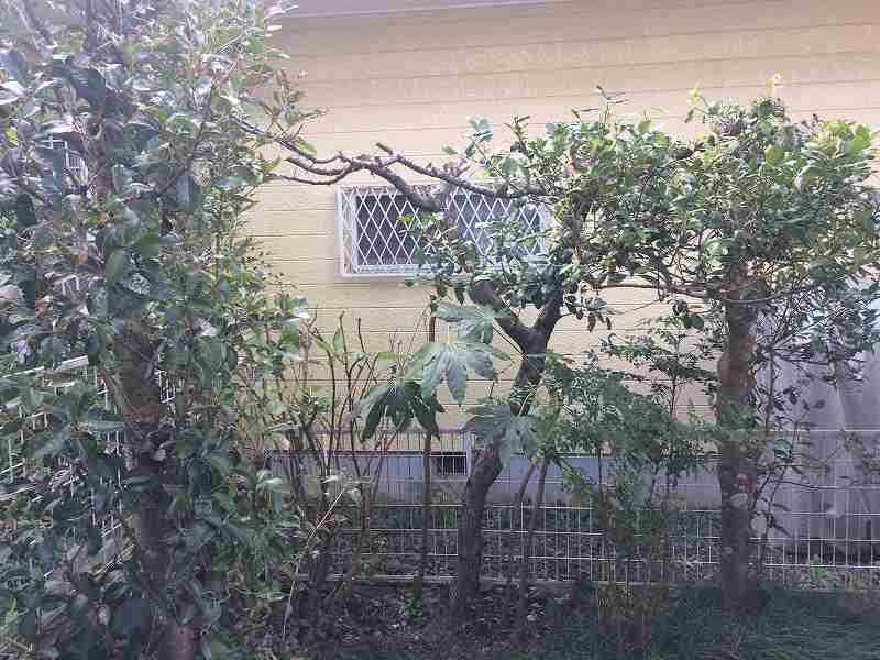 【庭の手入れ】植木屋さんには頼みたくない!【木を大きくしない】-9