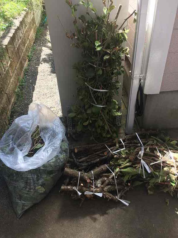 【庭の手入れ】植木屋さんには頼みたくない!【木を大きくしない】-12
