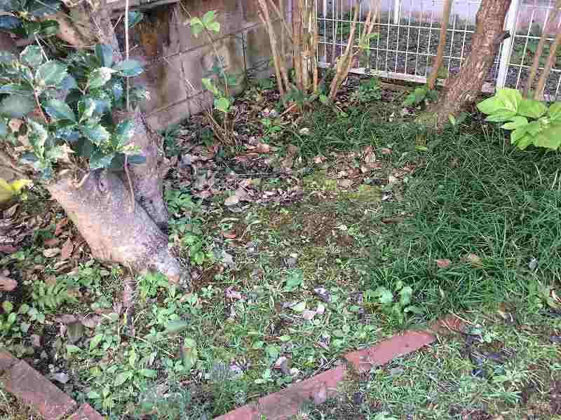 【庭の手入れ】グランドカバー用チップを使ってみた!【雑草対策】2
