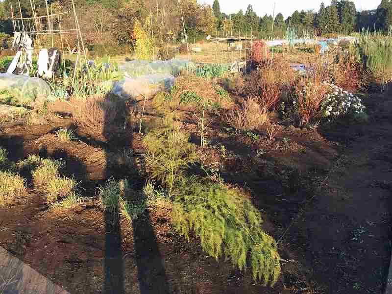 【秋も終わり】スローに楽しむ家庭菜園のすすめ5【きれいに片付け】3