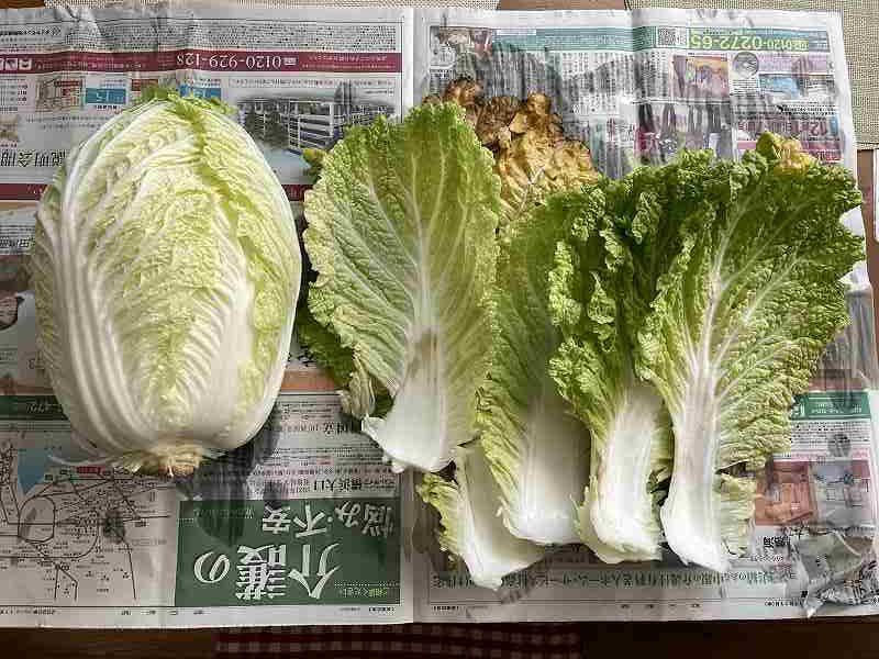 【意外と簡単!】いただいた白菜を漬けてみる【塩分がポイント】1