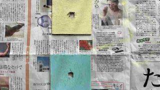 【DIY】実家のトイレのドアノブが壊れてしまった!【簡単修理】16